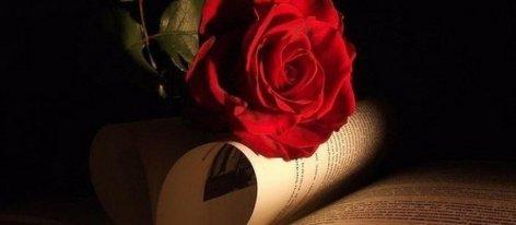 870x380xkasjopeja-flawer-roses-d186d0b2d0b5d182d18b-leonardgregory-rose-flower-book-flowers_large-30mg3rea447ha0zd96251c.jpg.pagespeed.ic.ufZm0aknol