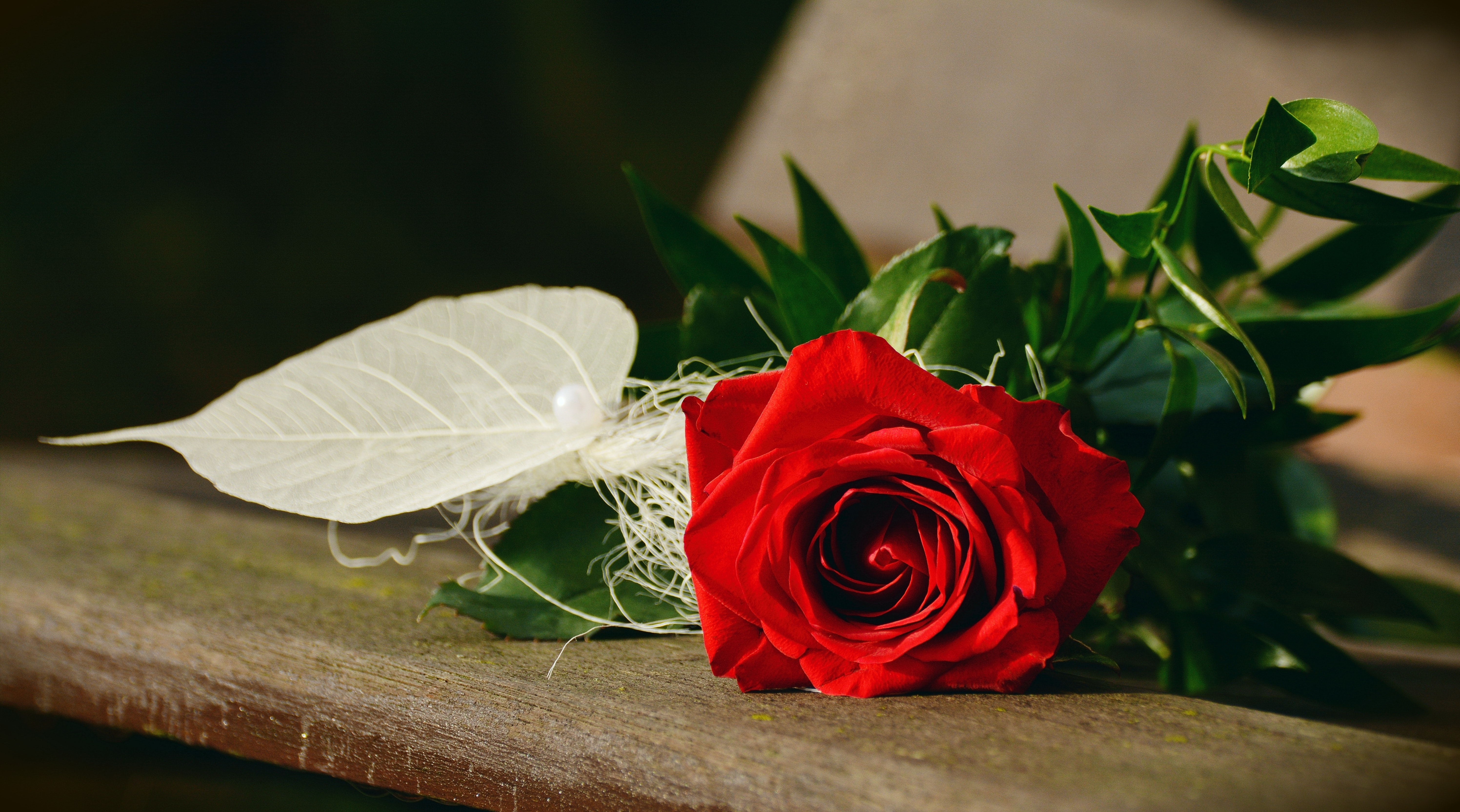 red-rose-flower-207999